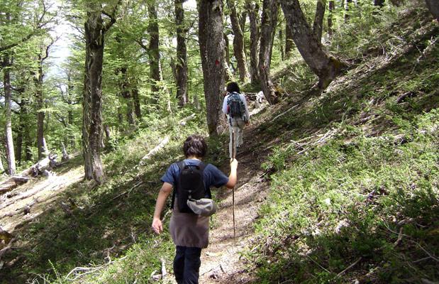 Trekking: una opción para recorrer los bosques patagónicos