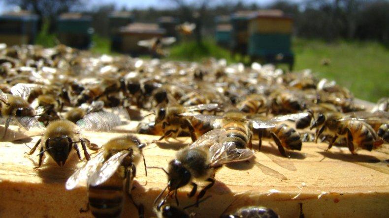 La apicultura toma fuerza en conjunto