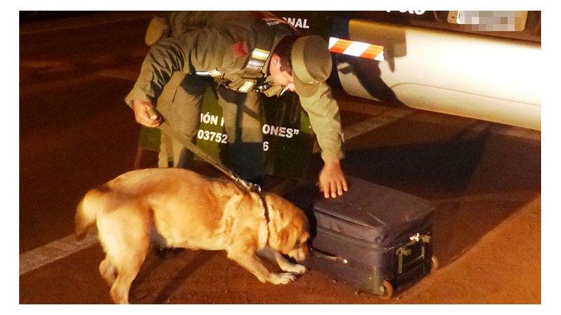 El Tribunal Oral Federal de Comodoro Rivadavia condenó a un cocinero que transportaba casi 13 kilos de marihuana desde Posadas a Río Gallegos. Un perro de Gendarmería descubrió el cargamento en Arroyo Verde.