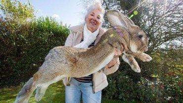 ¿Cuánto pesa el conejo más grande del mundo?