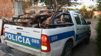 Los guanacos que fueron incautados fueron incinerados en el basural de Camarones.