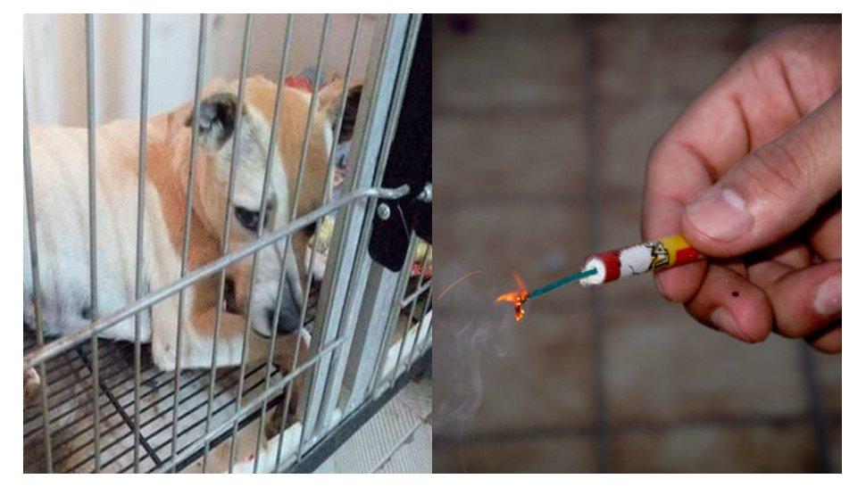 Explotaron un petardo en la boca de un perro mientras festejaban el final de clases