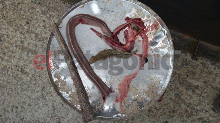 Una víbora intentó atacar a un hombre, la mataron y le hicieron una autopsia