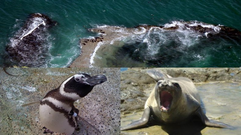 Si un animal sale del agua es por una razón y no hay que molestarlos
