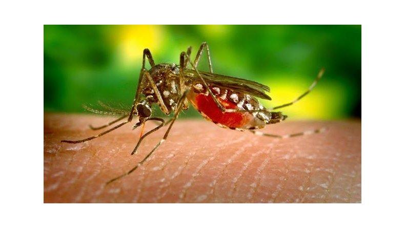 Alertan a los turistas que viajan a Brasil por el virus zika