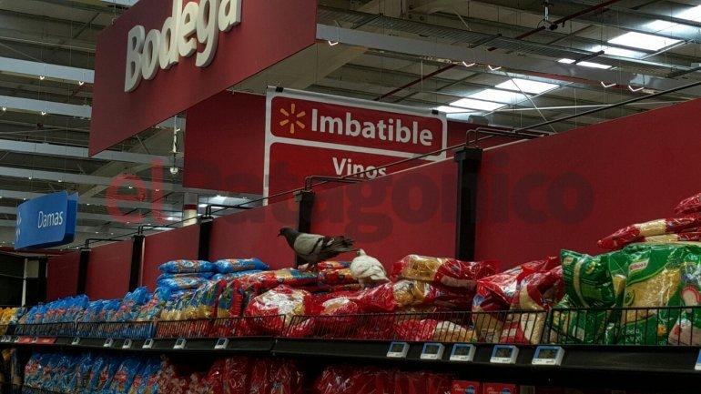 Denunciaron la presencia de palomas en las góndolas de un supermercado