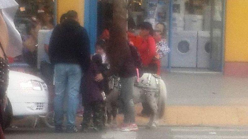 Otra vez denuncian maltrato animal hacia un pony