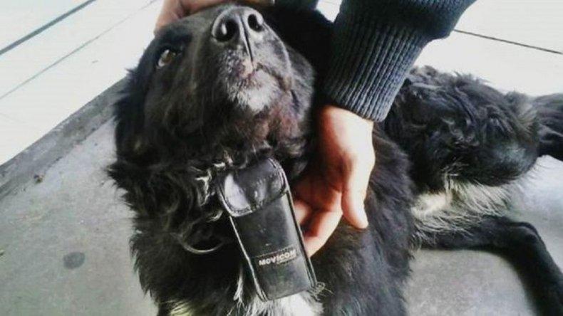 Encontraron un perro con un Movicom atado y con llamadas del año  2005