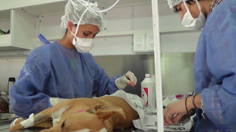 El viernes esterilizarán a perros y gatos en Km 3