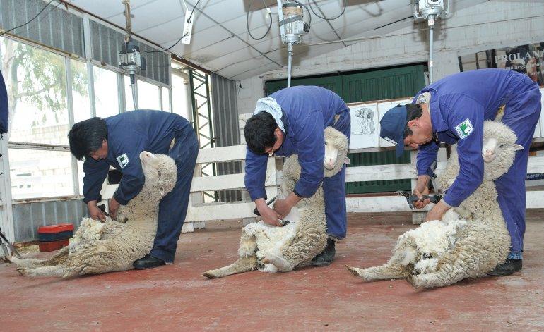 Las nuevas medidas favorecen al sector lanero de Chubut