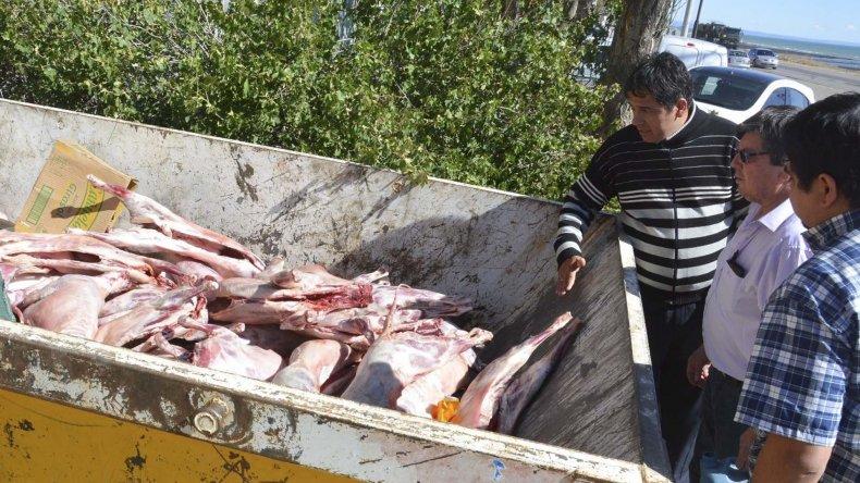 Los corderos fueron depositados en un contenedor y posteriormente trasladados al basural municipal donde se procedió a su incineración.