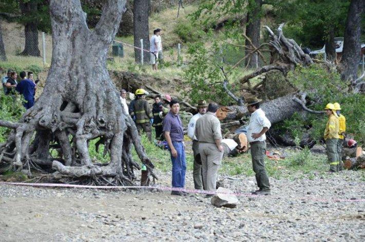Dos niños murieron aplastados por un árbol