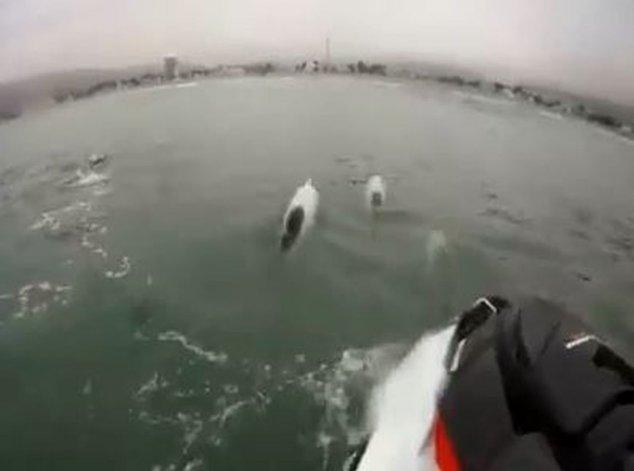 ¡Entrenó acompañado por toninas en aguas abiertas de Rada Tilly!