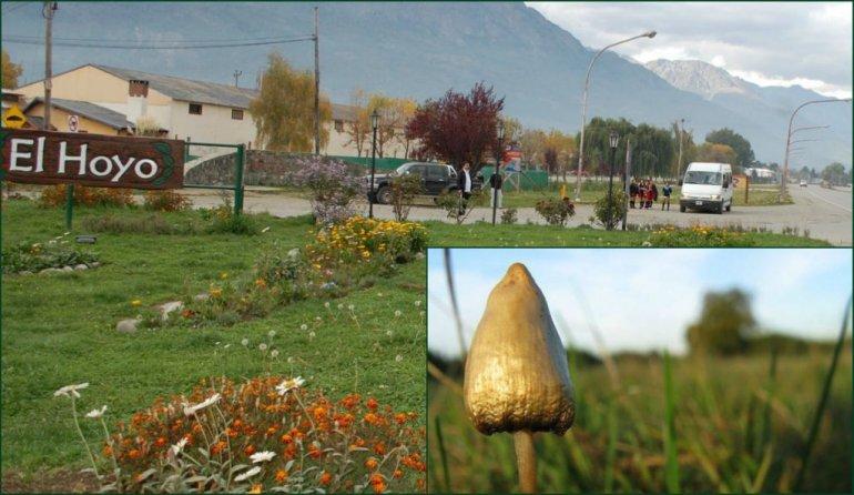 Secuestran hongos alucinógenos y marihuana en El Hoyo