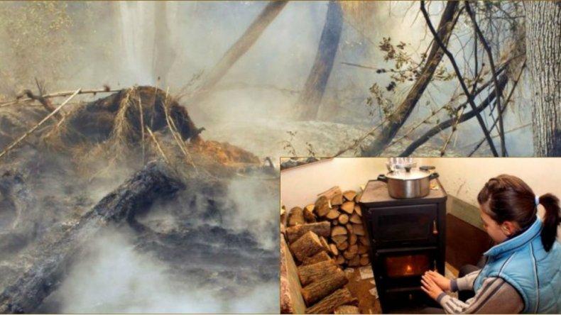 Destinarán leña de los bosques quemados a familias de pocos recursos