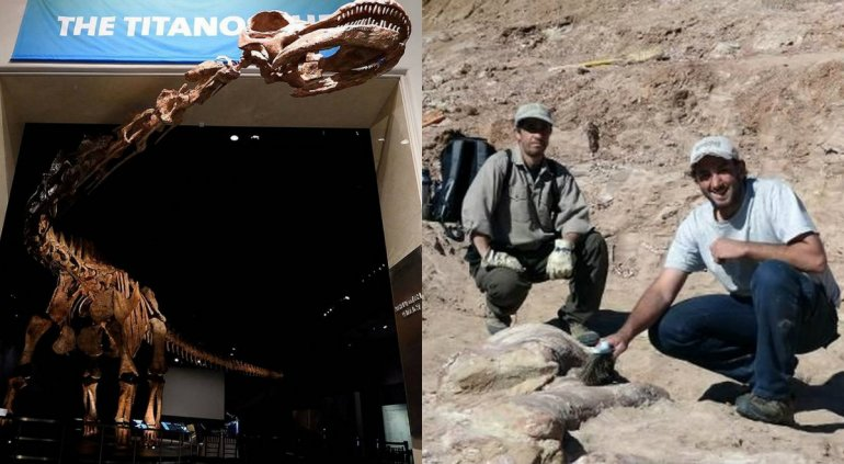 Exhiben en Nueva York el dinosaurio más grande del mundo hallado en Chubut