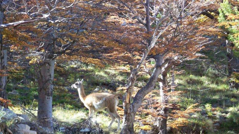En La Hoya se puede observar la fauna del lugar