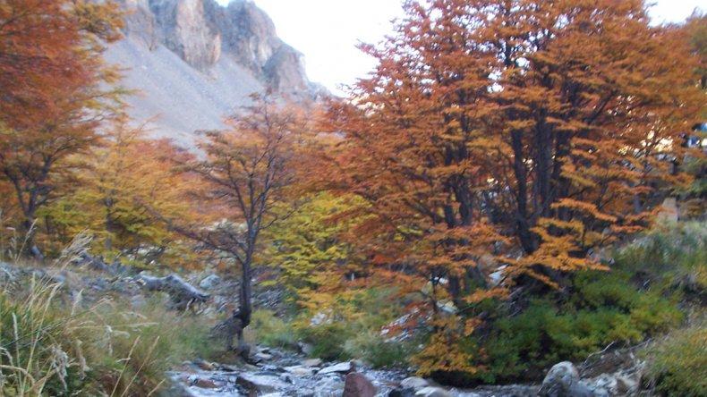 Los senderos permiten recorrer el bosque de lenga