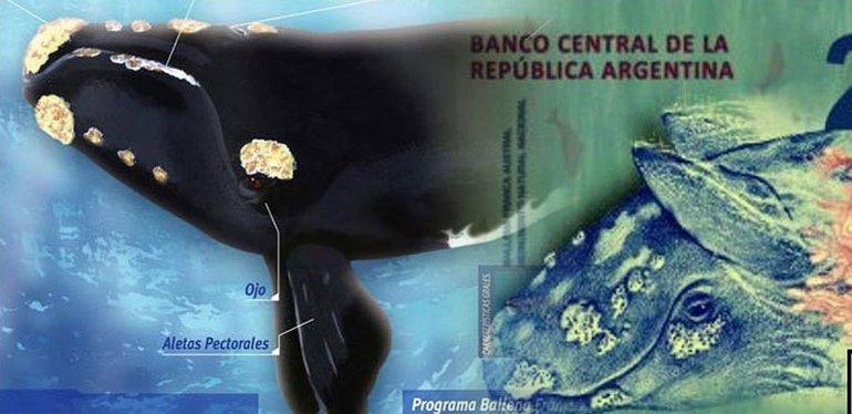¿La ballena está al revés? mirá los ocurrentes tweets