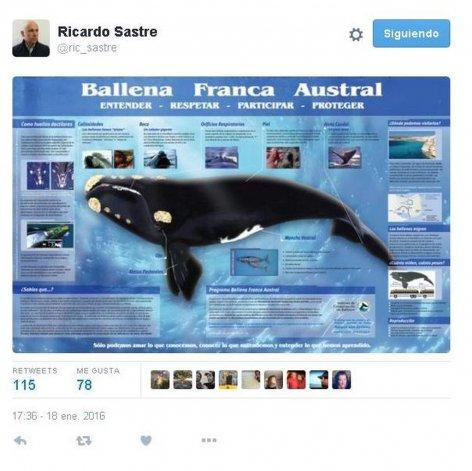 Sastre cuestionó el diseño de la ballena del billete de 200 pesos