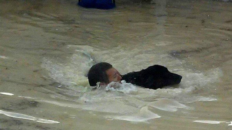 Un guardavida salvó a un perro en medio del temporal