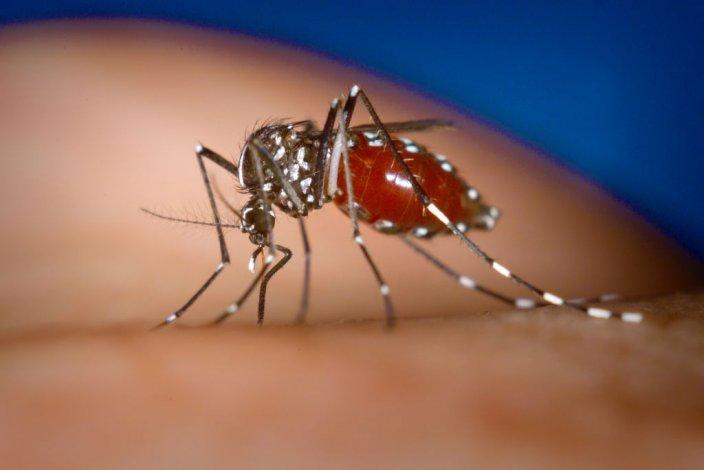 Se registraron tres casos posibles de dengue en Chubut
