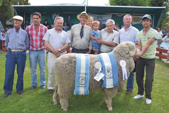 Como cada año los mejores ejemplares ovinos de la Patagonia participarán de la expo de la Sociedad Rural de Comodoro Rivadavia.