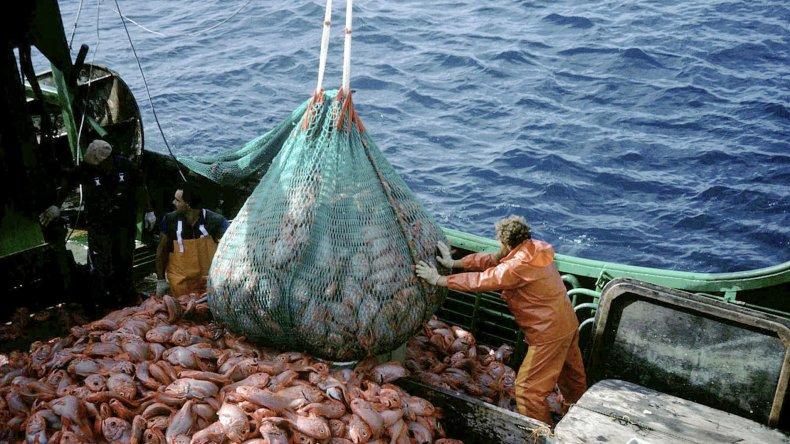 Las exportaciones de pescados y mariscos cayeron un 14% en 2015