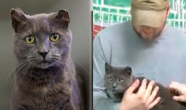 Una gata encontró  a su dueño después de 4 años