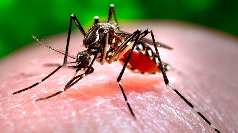 Confirmaron el primer caso autóctono de zika en Argentina