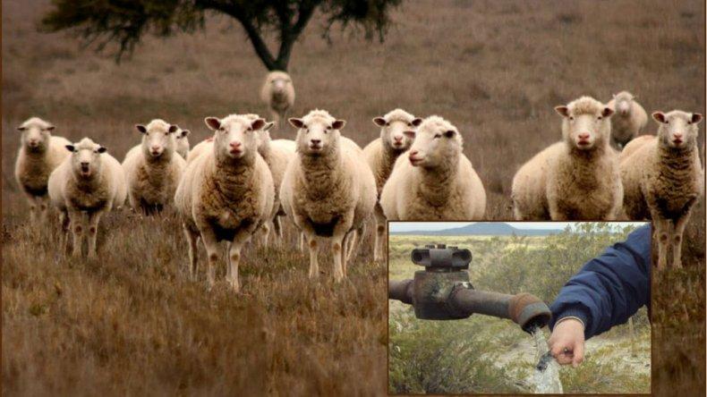 Ganaderos podrían  pagar con corderos perforaciones para tener agua