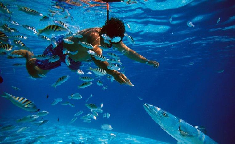 Es el hogar de las paredes de arrecife más impactantes jamás vistas.