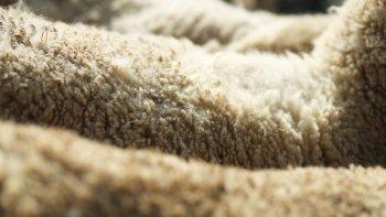 recuperan ganado robado en establecimiento rural