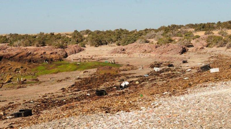 Guardafaunas sacaron 300 cajones de desechos en Punta Tombo