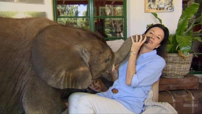 Elefante se fanatizó con la mujer que lo salvó y la persigue