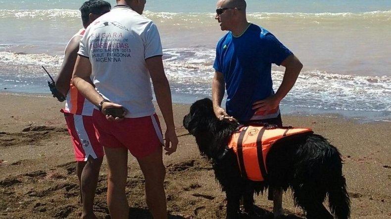 Guardavidas realizaron una experiencia de rescate con un perro Terranova