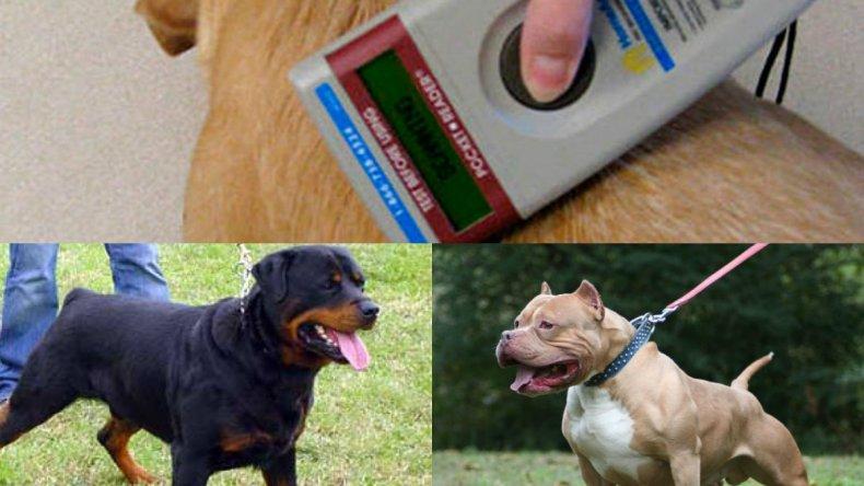Controlarán con un chip a los perros  peligrosos