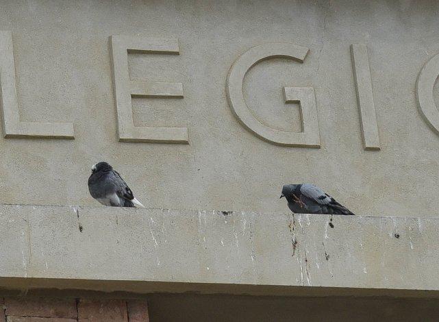 Las palomas generan molestias entre los habitantes del casco céntrico