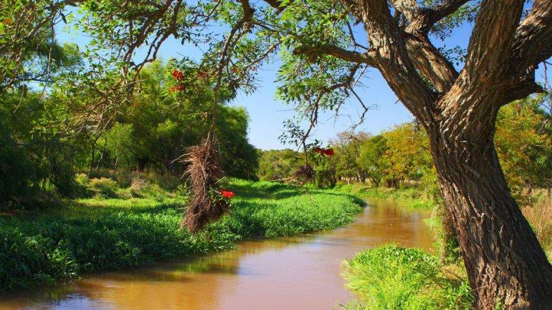 El delta superior del río Paraná y sus entornos naturales son protegidos desde 1992 en el Parque Nacional Pre Delta