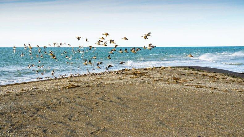 En la reserva Punta Popper se pueden realizar safaris fotográficos y observación de aves.