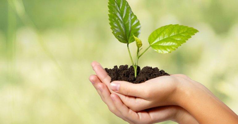 Multarán a comercios y bancos por no plantar árboles