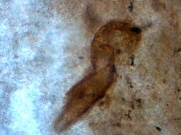 Descubren en Santa Cruz yacimiento  jurásico con gran diversidad de fósiles