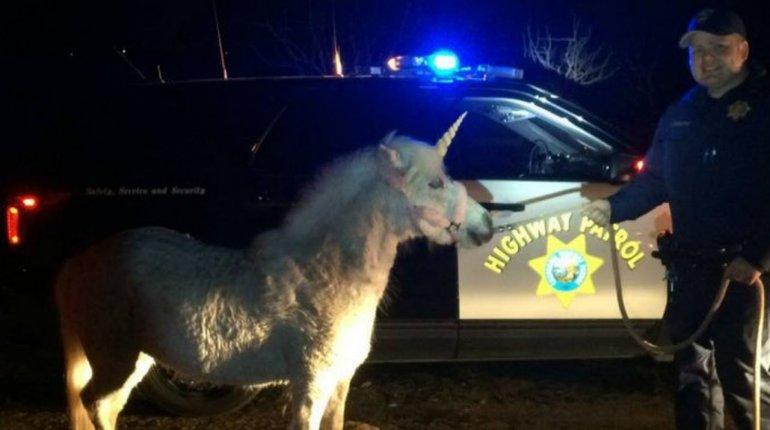 Después de perseguirlo tres horas capturaron a un supuesto unicornio