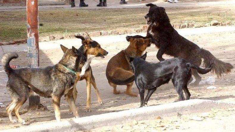 Proteccionistas de animales piden que González se rectifique