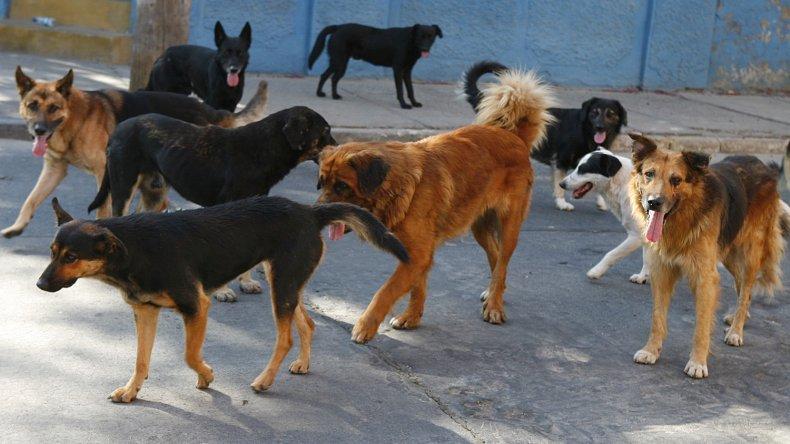 Una ONG de Buenos Aires interviene para evitar la eutanasia