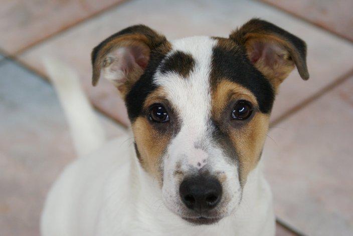 Una ordenanza autoriza a matar perros con monóxido de carbono