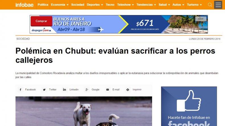 Polémica nacional: fuerte repercusión sobre la posible eutanasia a perros