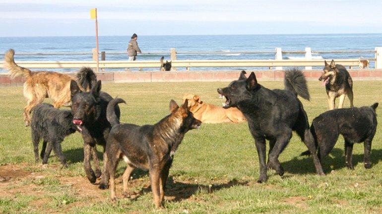 La problemática de los perros sueltos en la vía pública volverá al Concejo Deliberante