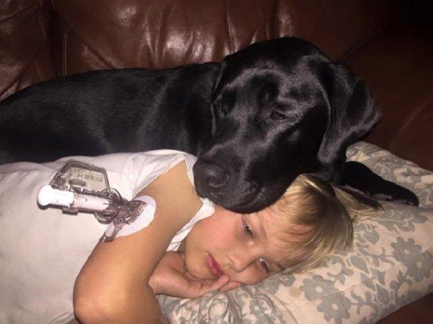 Jedi, el perro que salvó a un nene con diabetes