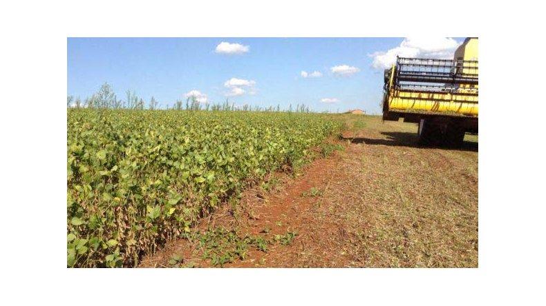 Se espera una cosecha récord de soja.
